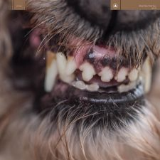 Blanck Mass's 'World Eater' up for pre-order